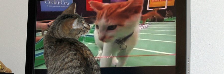 Kitten Bowl News
